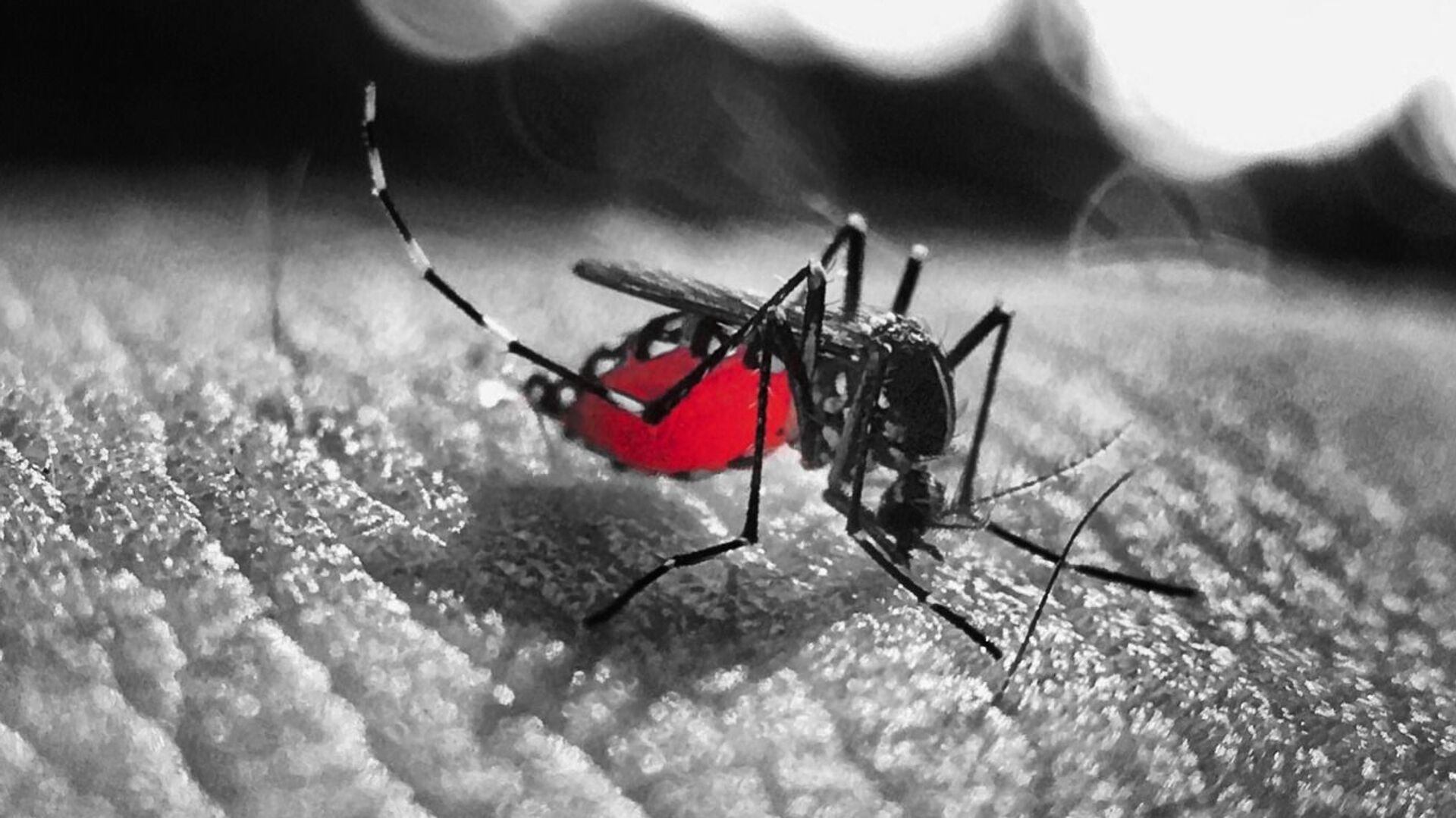 Un mosquito (imagen referencial) - Sputnik Mundo, 1920, 12.08.2021