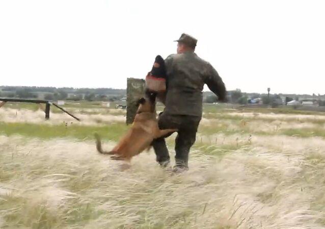 Los perros militares de Rusia ponen a prueba su resistencia