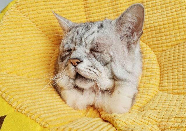 Toby, gato con una rara condición genética