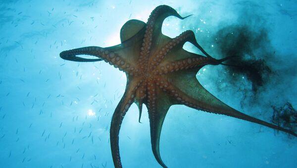 El asombroso mundo animal de los océanos - Sputnik Mundo