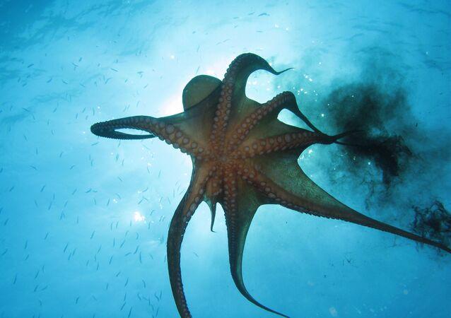 El asombroso mundo animal de los océanos