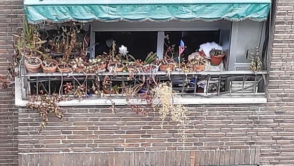 Balcón con macetas secas  - Sputnik Mundo