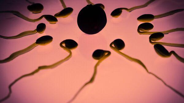 Unos espermatozoides con un óvulo - Sputnik Mundo