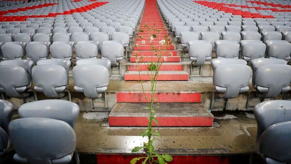 Una planta en un estadio de fútbol - Sputnik Mundo