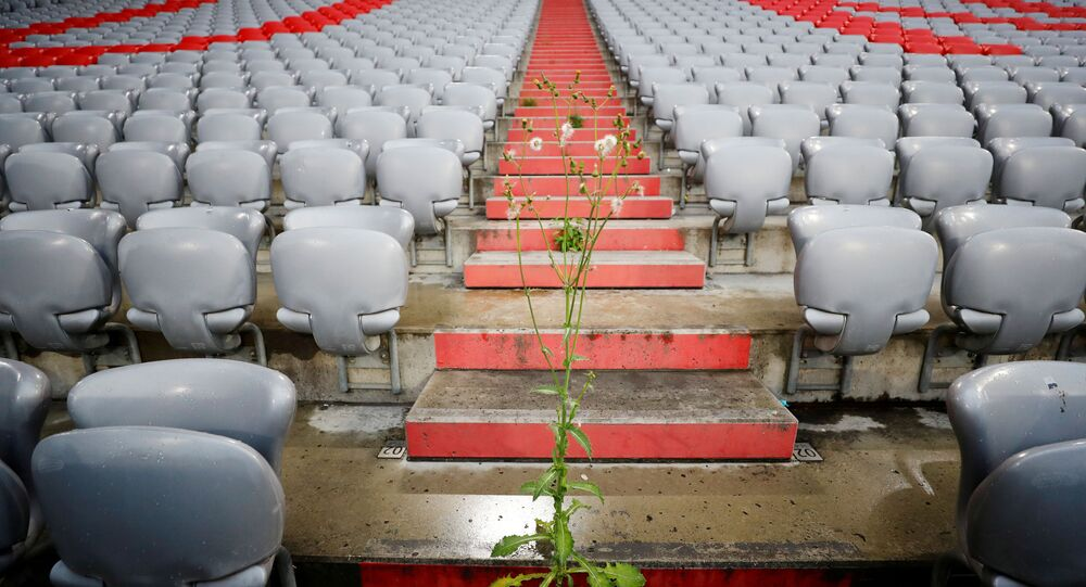 Una planta en un estadio de fútbol