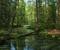Uno de los innumerables ríos pintorescos y sin nombre en la región de Meschera, en Rusia central.