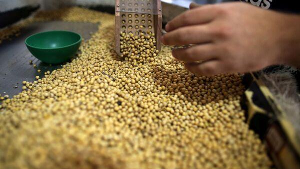 Producción de soja en Argentina - Sputnik Mundo