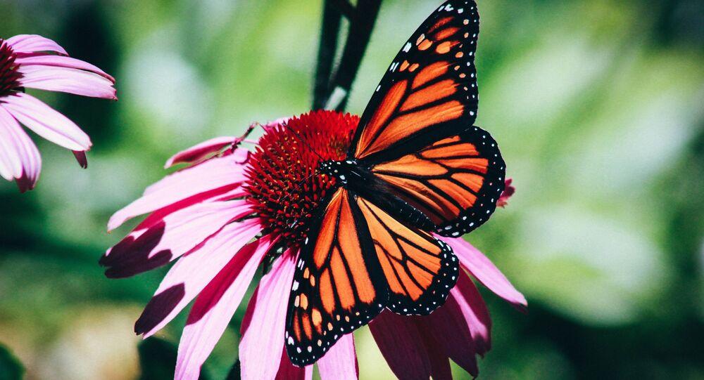 Una mariposa (archivo)