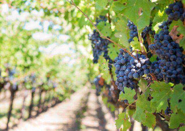 Una viña (imagen referencial)