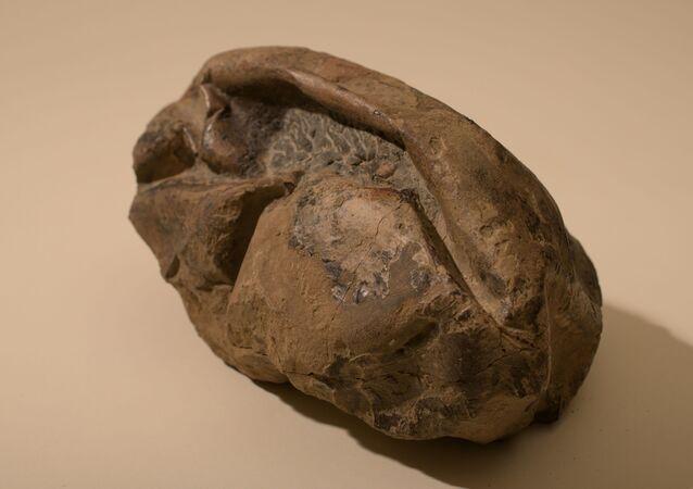 El huevo más grande de la era de los dinosaurios