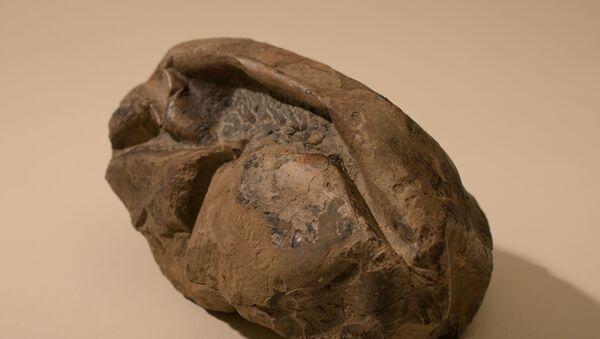El huevo más grande de la era de los dinosaurios - Sputnik Mundo
