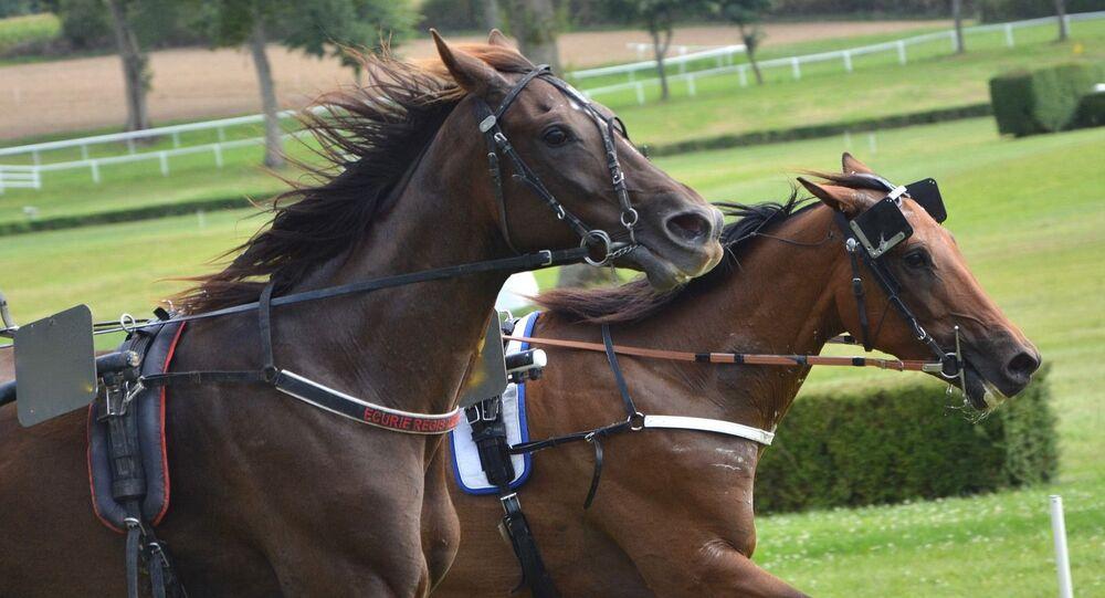 Carrera de caballos, foto de archivo