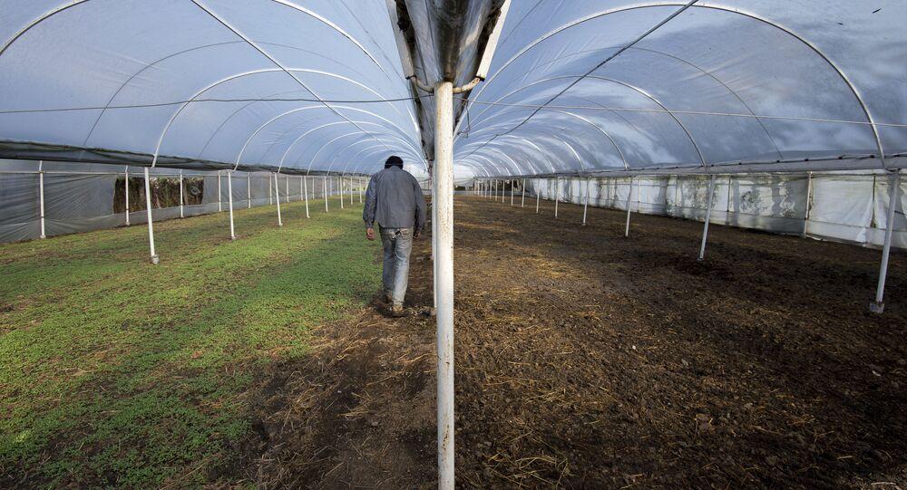Un trabajador en un invernadero (imagen referencial)