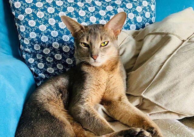 El gato de la gimnasta rusa Alexandra Soldatova