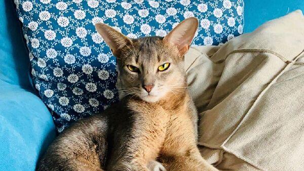 El gato de la gimnasta rusa Alexandra Soldatova - Sputnik Mundo
