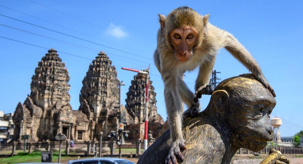 Un macaco en la ciudad tailandesa de Lopburi