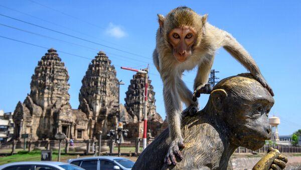 Un macaco en la ciudad tailandesa de Lopburi - Sputnik Mundo