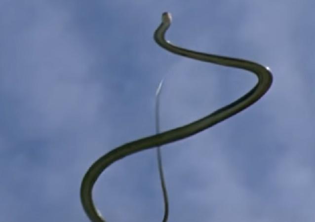 Una serpiente voladora