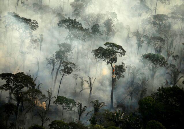 Incendios en la Amazonía en Brasil