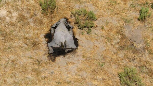 Un elefante muerto en Botswana - Sputnik Mundo