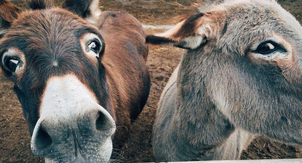 Imagen referencial de burros