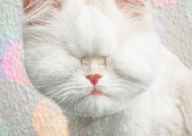 Moet, una gatita ciega, estrella de Instagram