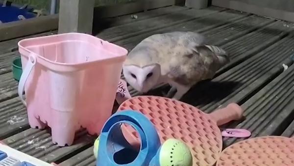 Estos tiernos animales salvajes juegan como niños en el patio de una casa - Sputnik Mundo