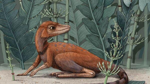 'Kongonaphon kely', predecesor de los dinosaurios  - Sputnik Mundo