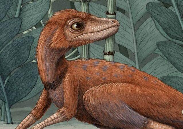 'Kongonaphon kely', predecesor de los dinosaurios