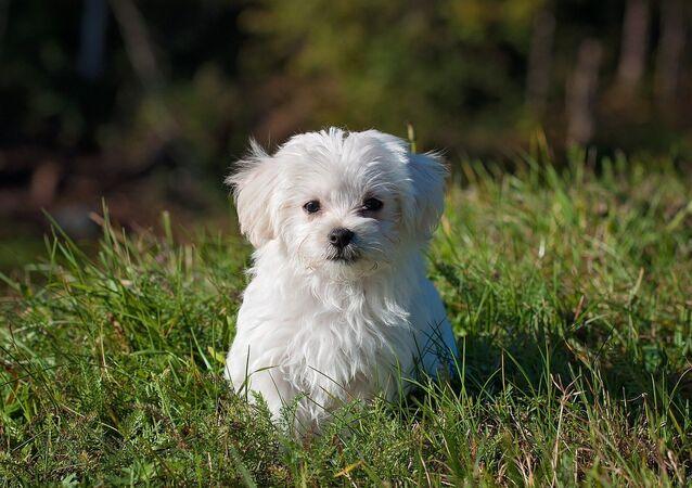 Perro (imagen referencial)