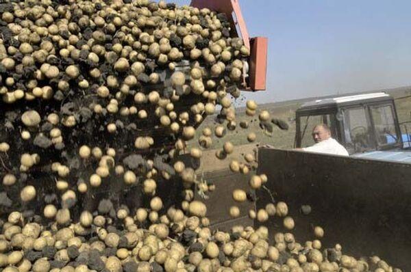 Patatas - Sputnik Mundo