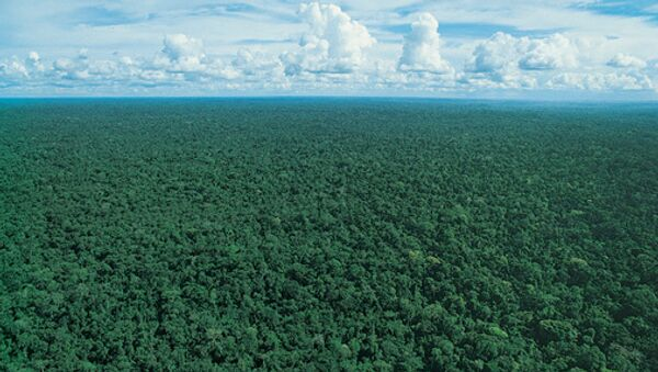 Selva amazónica - Sputnik Mundo