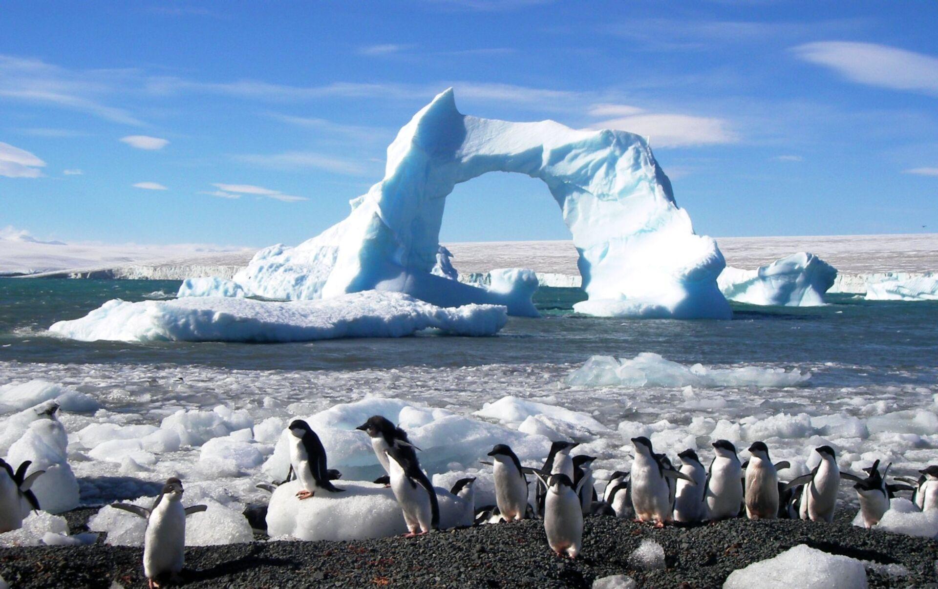 COVID-19 y la Antártida: ¿qué pasa en el continente blanco? - 02.04.2020,  Sputnik Mundo
