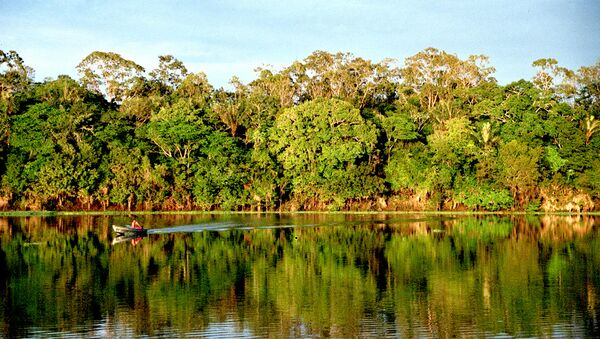 Bosques amazónicos - Sputnik Mundo