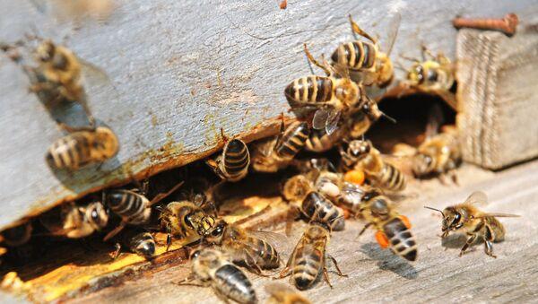 La miel de Manuka vence a las bacterias más potentes, según científicos - Sputnik Mundo