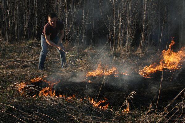 Los incendios forestales - Sputnik Mundo