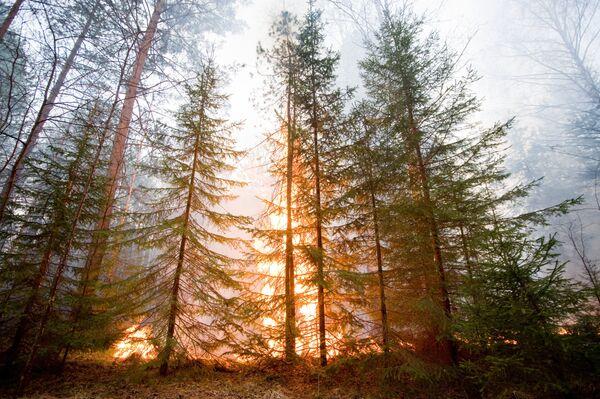 Los incendios forestales arrasan en Rusia el doble de superficie respecto a 2010 - Sputnik Mundo