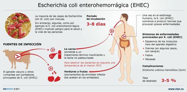 Escherichia coli enterohemorrágica (EHEC) - Sputnik Mundo