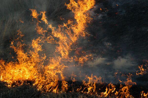 Incendios forestales arrasan en Rusia el triple de superficie respecto a 2010 - Sputnik Mundo