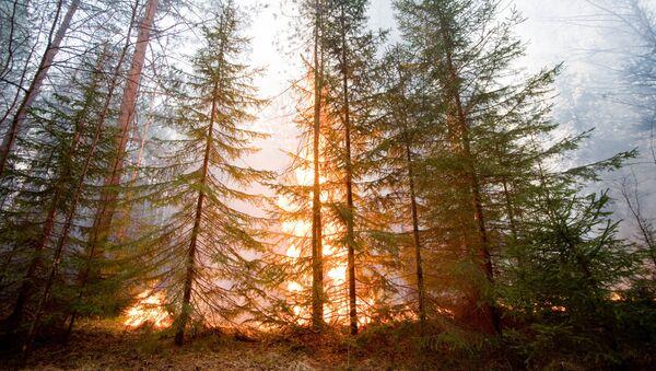 Лесной пожар в окрестностях города Ревда Свердловской области - Sputnik Mundo