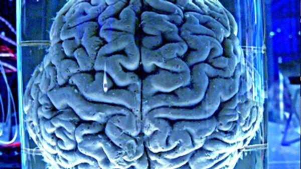 Cerebro humano autosuficiente para calmar el dolor, dicen los científicos - Sputnik Mundo