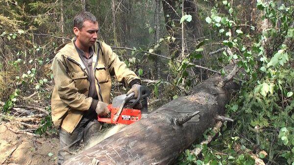 Los incendios forestales en Siberia son extinguidos con cortafuegos - Sputnik Mundo