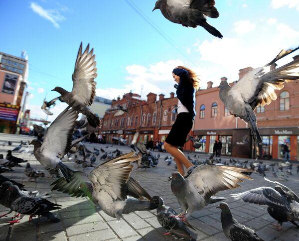 Un censo contabiliza más de 5,8 millones de aves en Europa - Sputnik Mundo