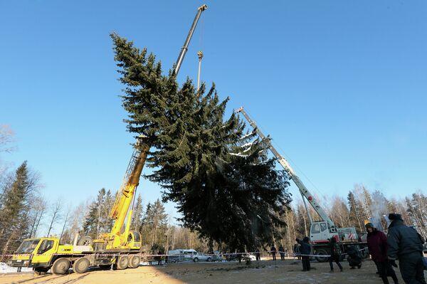 El árbol de Año Nuevo más importante de Rusia - Sputnik Mundo