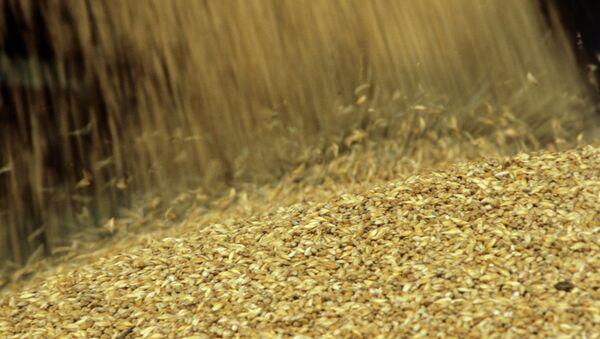 Урожай зерна - Sputnik Mundo
