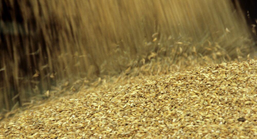 La cosecha de trigo