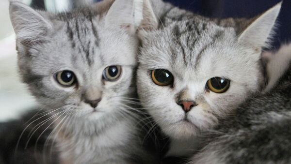 Gatos - Sputnik Mundo