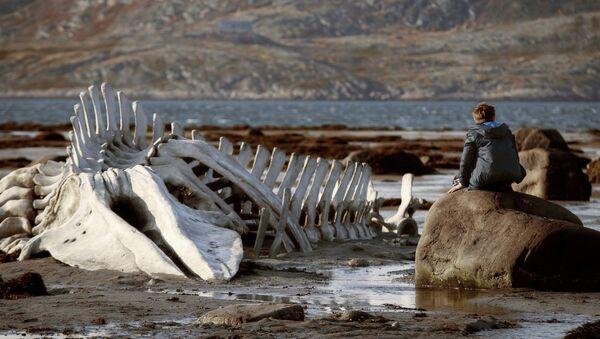 Leviatán nominada a los premios Bafta del Reino Unido - Sputnik Mundo