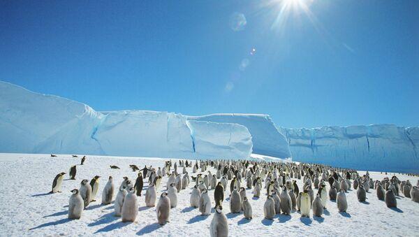 Колония императорских пингвинов в Антарктиде - Sputnik Mundo