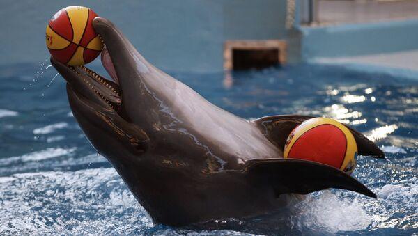 Delfín en el gran delfinario de Sochi en el Parque Riviera (Archivo) - Sputnik Mundo